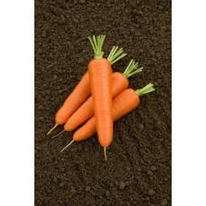 Морковь Олимпо F1  0,5г Мировые Семена VITA GREEN