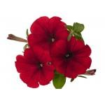 Цветы мелкая фасовка 1.однолетники
