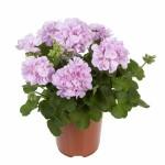 Цветы мелкая фасовка 4. комнатные