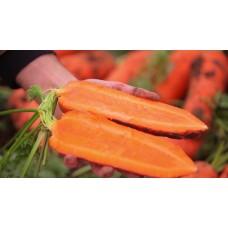 Морковь СВ 7381 F1 фр 1,6-1,8 5000шт з/п S