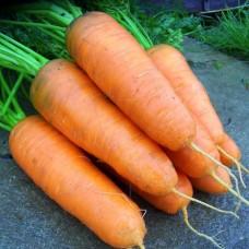 Морковь Шантанэ Курода  10г з/п N.W.BIO