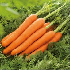 Морковь Лагуна F1 (25000шт) N