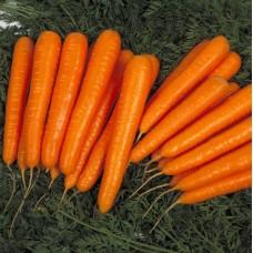 Морковь Лагуна F1  0,5г Мировые Семена VITA GREEN