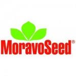 MoravoSeeds