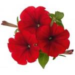 Цветы ВитаГрин